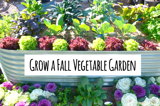 How to plant a vegetable garden in August